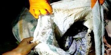 Salah satu karung berisi ular piton yang ditemukan warga di Jalan Banitan pada Selasa (7/4/2020). Ada 10 yang ditemukan dengan jumlah ular sebanyak 30 ekor.