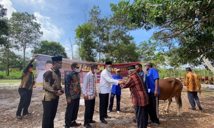 Wakili Gubernur, Sekda Kalteng serahkan 22 Sapi ke Kobar