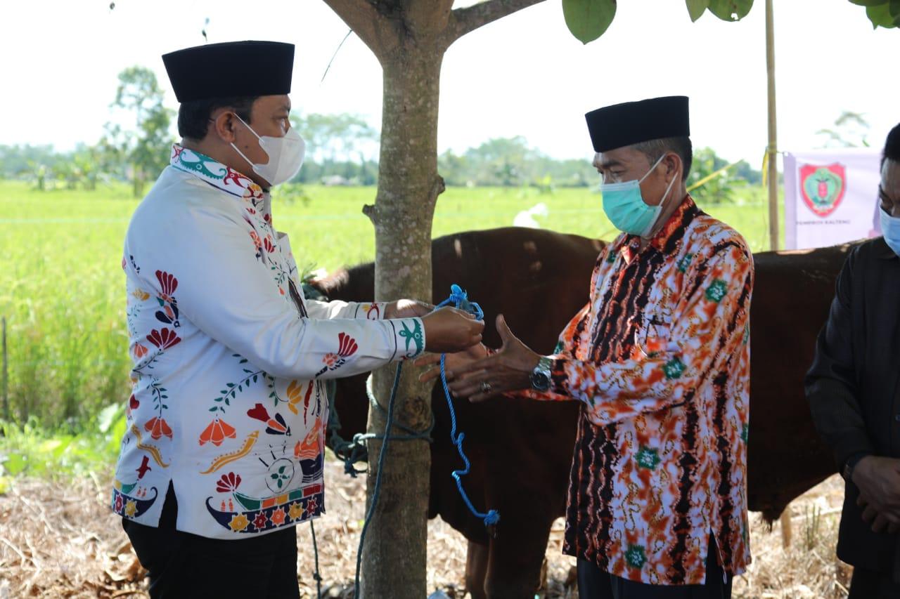 Wagub H. Edy Pratowo saat menyerahkan bantuan hewan kurban di Pulang Pisau